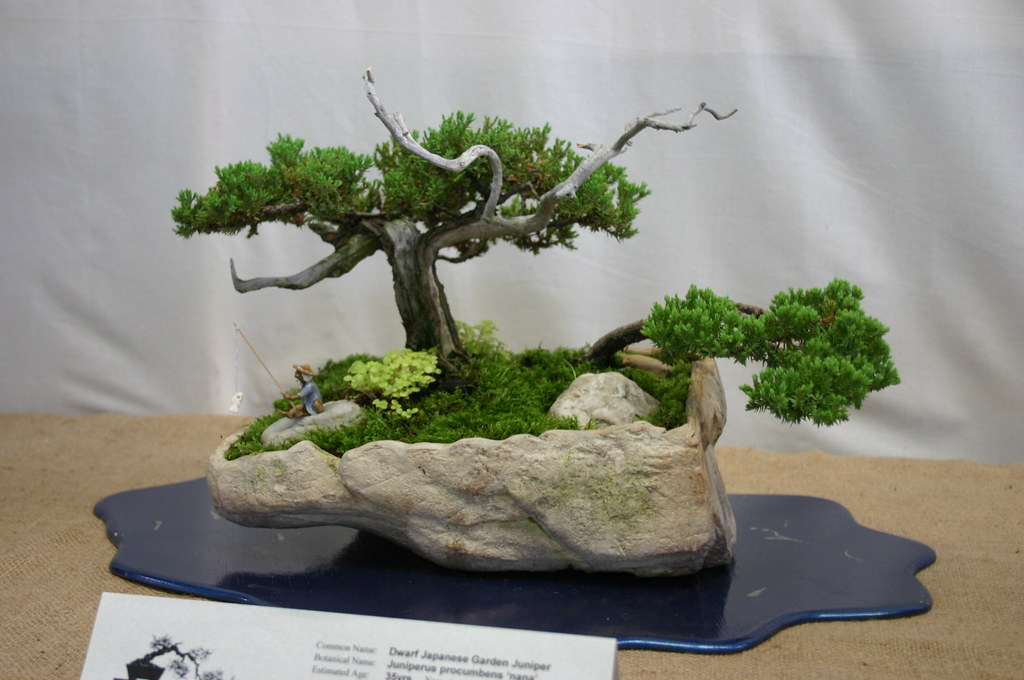 The world 39 s best photos of japanese and juniperus flickr for Jardin japonais miniature
