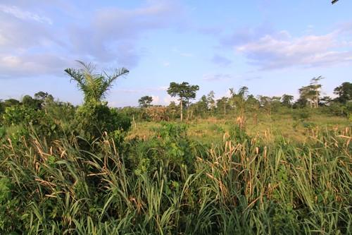 Ghana countryside...