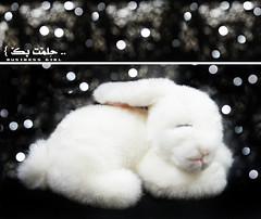 ..   } ([usss ] ~) Tags: white black rabbit bunny bokeh sleep dream arnab           annoby