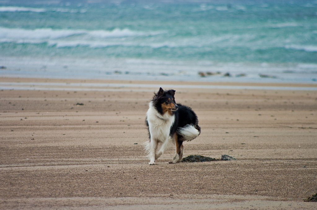 Dog Friendly Hotels Ireland Donegal