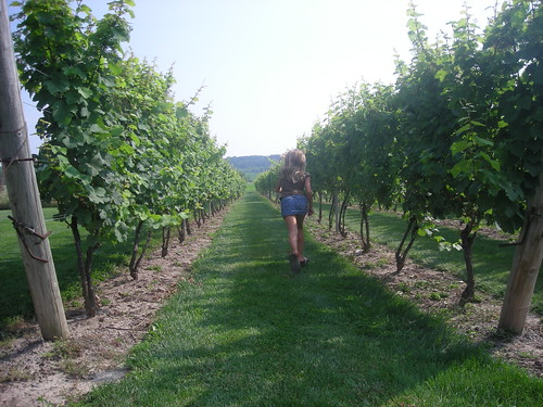 Walking in the Vineyard