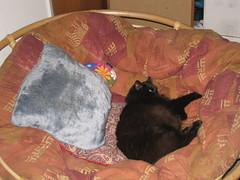 Extra Pillow!