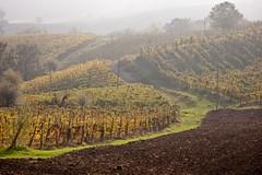 Hills (2darkwings) Tags: green wine hills uva vino collina grapevines canonpowershots70 vigneti montaltopavese oltrepòpavese