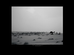 Ships of Desert  [3] [ B&W ] |   (Abdullah.N.KH) Tags: ocean sunset sea portrait abstract building nature colors smile silhouette sunrise canon landscape sadness waves 300d desert natural happiness wideangle nassir abdullah oldhomes  khamees 5dmark2 mark|| abdullahnasser