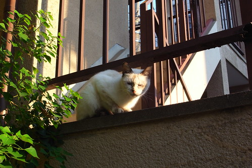 Today's Cat@20091013