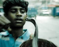 """Wherever you are, be there..."" (Kewal Gala) Tags: life boy india rural death concentration dangerous focus cobra folk snake young 365 attention poisionous charmer steet distraction risky mywinners"