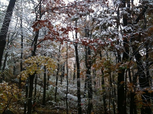 almost the same view of the woods from yesterday, with snow