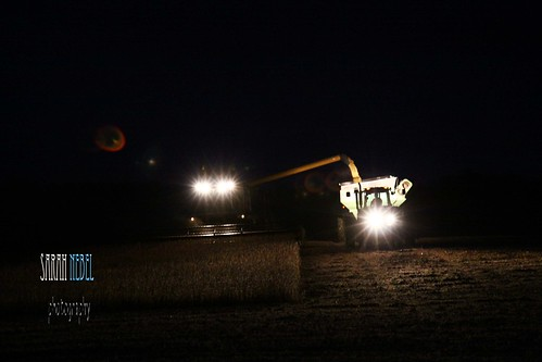 . night time harvest .