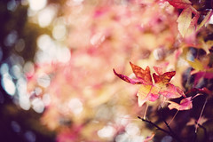 where's my autumn (besimo) Tags: autumn light fall leaves season bokeh f14 bielefeld oetkerpark d700 besimmazhiqi 50mm14g levelandtap