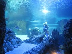 Newport Aquarium 144 (foodbyfax) Tags: newportaquarium