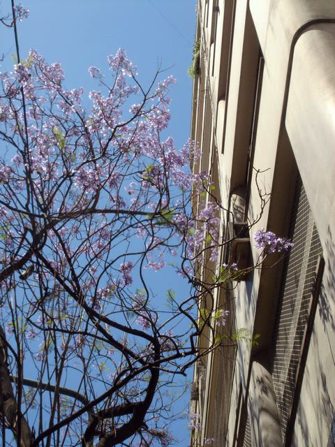 Spring in Buenos Aires