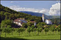 Sequals (livia.com) Tags: italy vigne friuli pordenone vigneti sequals