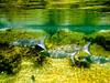 Aquarium (nosha) Tags: blue school vacation holiday fish reflection green nature water beauty yellow coral mexico eyes nikon snorkel wildlife lagoon snorkeling april jpg 2009 f28 lightroom 77mm blackmagic d40 nosha yuccatan april2009 canonpowershotsd950is 77285mm