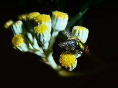 On the Fly (Jenn (ovaunda)) Tags: black yellow blackbackground night dark lowlight sony onblack dsch5 flickraward jennovaunda ovaunda