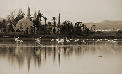 (ssj_george) Tags: leica trees sunset sky sun mountain lake water birds sepia reflections temple lumix airport sundown flamingo salt cyprus mosque palm panasonic saltlake tekke 1001nights haram umm larnaca halan aplusphoto tz3 lumixaward sulta   platinumpeaceaward