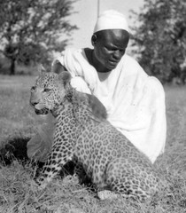 Africa in the early 1940s (gbaku) Tags: pictures africa wild cats west history cat leopardo photo photos african picture historic photographs leopard photograph westafrica afrika historical anthropologie anthropology africain afrique ethnography ethnology africaine panthera lopard westafrican pardus ethnologie  afrikas