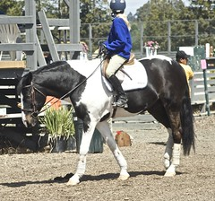 Pinto (Just chaos) Tags: from horse view you photos or everyone ungulate animalia mammalia equus domesticated equidae chordata perissodactyla oddtoed caballusx