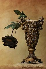 Still Flower (Hamad Al-meer) Tags: life stilllife brown flower canon eos gold still hamad soe 30d حمد almeer platinumphoto المير colourartaward hamadhd hamadhdcom wwwhamadhdcom