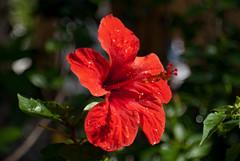 Fiore 2 (ennio1608) Tags: fiore calabria primopiano