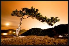Hologramas (Muchilu) Tags: moon tree night arbol long exposure shot d explore ibiza nocturna sabina eivissa frontpage 90 exposicion larga contaminación nkon d90 savina lumínica benirrasbenirràsplayahippies