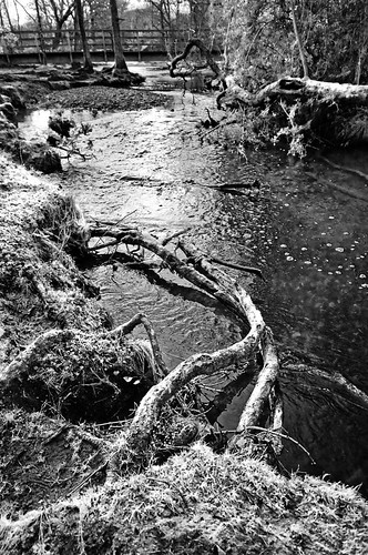 New Forest stream B&W / Kol Tregaskes