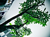 Large tree growing in the room --- Special Assignment: