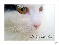 Have a Happy Weekend..(Mutlu Haftasonları) (sevgi_durmaz) Tags: friends cute beautiful beauty animals cat happy flickrfriends kissable happyweekend pamuk abigfave bestofcats relaxedweekend