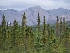 Fairbanks to Denali