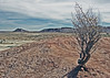 STARKNESS (ABSTRACTACUS) Tags: tree landscape lpdesert lpdeserts