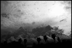 Florida Sky Is Architecture (scottmontreal) Tags: sky blackandwhite nature skyline architecture clouds canon palms flickr florida miami palmtrees climatechange bianconero stormclouds neroameta flickrunited hurricanebill climaticocambio scottmontreal