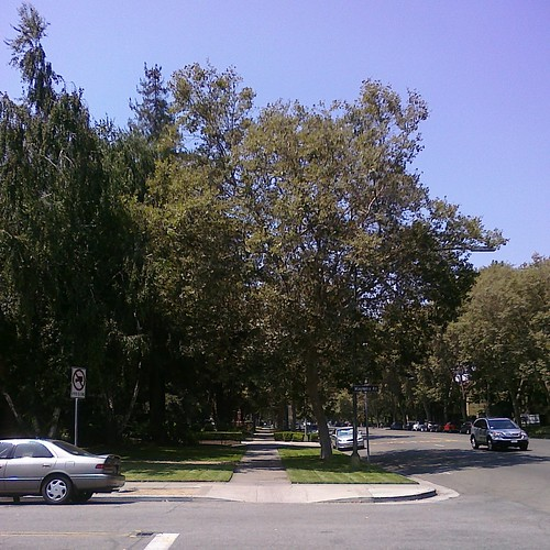 The Alameda, trees