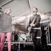 Milk Live Concert @ Autumn Rock Festival-10