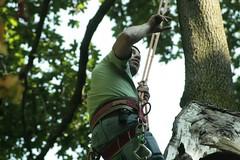 _MG_6372.JPG (zimbablade) Tags: trees sleepyhollow dougmiller videopoem