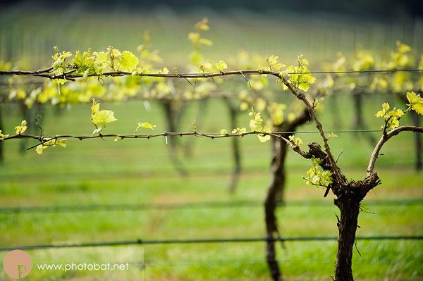 Voyager Vineyard