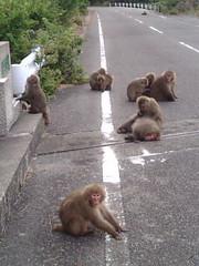 猿居すぎやろ