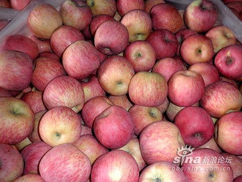 陕西的大苹果烂掉了喂猪