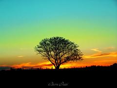 Atardecer en el campo (DiEgo bErrA) Tags: mywinners colorphotoaward arbolcampoatardecercielonegrocontornofigurasolnaranjatreefieldtogetlateblackskycontourappearssunorangelechampdarbrepourobtenirladcoupenoireenretarddecielapparatorangedusoleildasbaumfeld zumdersptenschwarzenhimmelformzuerhaltenerscheintsonneorangeilcampodellalberoperottenereilprofiloneroritardatodelcielocomparearanciodelsoleocampodarvoreparacomeocontornopretoatrasadodocua