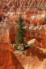 Standing strong....Bryce Canyon Hike (rolfspicture) Tags: light usa tree nature landscape utah nationalpark canyon bryce