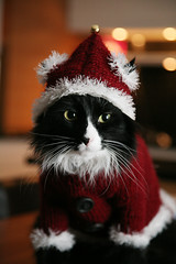 Disi waiting for the christmas... (Hildur Maria) Tags: christmas for waiting novfrh09