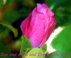 Happy Pink Tuesday - Rise and Shine and Give God the Glory (prayerfriends) Tags: california pink white black flower green leaves petals closed glow shine bokeh text details bud picnik amadorcounty amadorflowerfarm