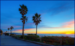 The Strand, El Porto, California (szeke) Tags: california sunset usa plant tree beach landscape us unitedstates palmtree manhattanbeach thestrand hdr elsegundo 2010 noiseware elporto photomatix imagenomic tumblr canon7d nikviveza2