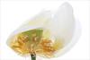 Lotus Flower - IMGC5325-1000 (Bahman Farzad) Tags: flower macro yoga peace lotus relaxing peaceful meditation therapy lotusflower lotuspetal lotuspetals lotusflowerpetals lotusflowerpetal