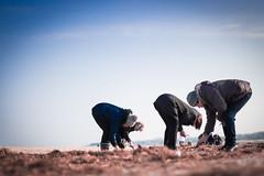 Amber Seekers (lukaszchlewinski1) Tags: amber seekers see canon 24mm poland swinoujscie photooftheday work people