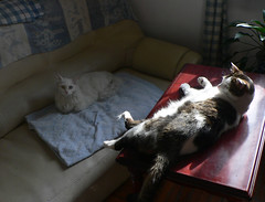 Yin & Yang of Table & Sofa #2 (Room With A View) Tags: yinyang catstogether