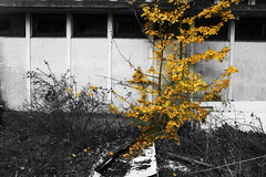 Fading (espri fotografeert) Tags: urban abandoned netherlands photoshop decay zwart wit zaandam urbex verval hemburgterrein