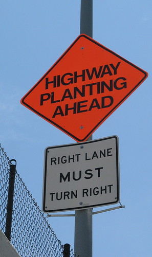 What happens when you plant a highway?