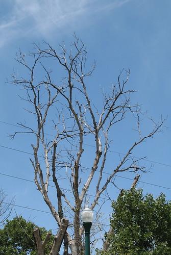 Dead tree, power lines, light pole