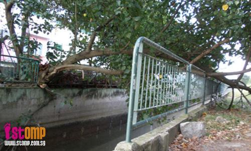 Fallen tree rips canal railings apart at Sungei Pandan