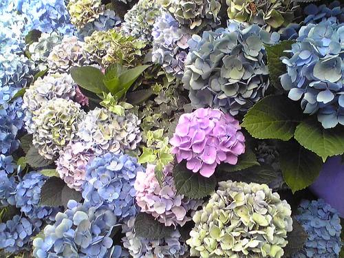 東京ミッドタウンに紫陽花オブジェ