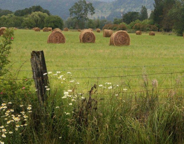 Florney Valley Pasture